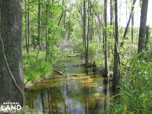 North Fork Edisto River Steedman Co : Leesville : Lexington County : South Carolina