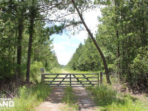 283 Acres Berkeley County : Cross : Berkeley County : South Carolina