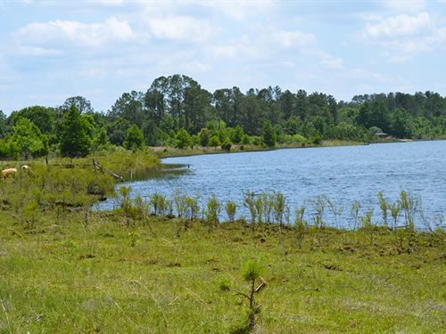 Umatilla 338 Acres : Umatilla : Lake County : Florida