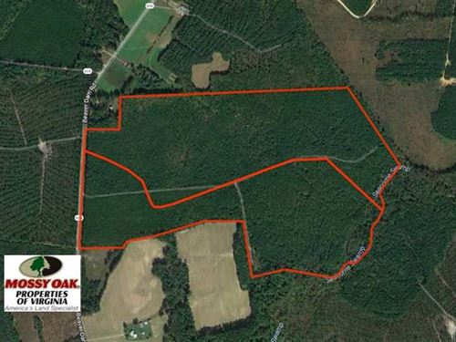 196 Acres of Hunting Land For Sale : Wakefield : Sussex County : Virginia