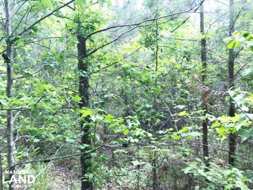 Hells Creek Timber Investment Tract : Vernon : Lamar County : Alabama