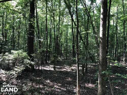 Newton County Timber Investment Tra : Conehatta : Newton County : Mississippi