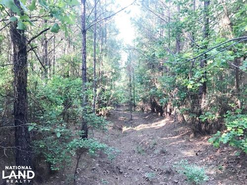 Blakely Creek Hunting And Timber In : Fayette : Alabama