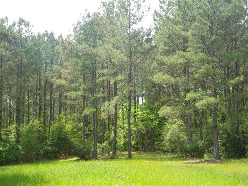Belleville Tract : Repton : Conecuh County : Alabama