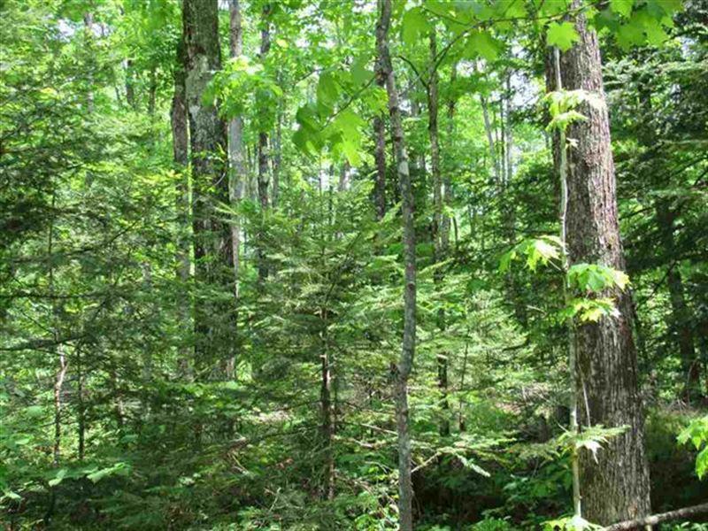 Fdr Wooded Wonder 1107587 : Kenton : Iron County : Michigan