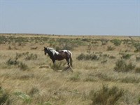 100 Acres, Perfect Ranch, $688/Mo : Sierra Blanca : Hudspeth County : Texas