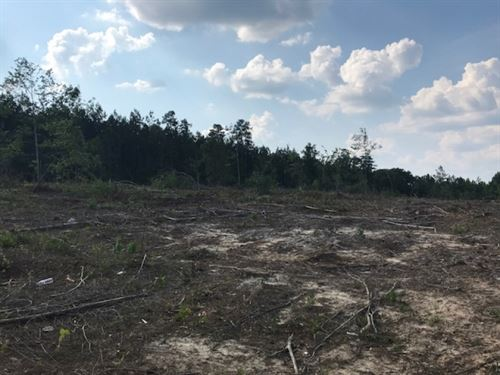 25 Acres Holloway Road Prentiss, Ms : Prentiss : Jefferson Davis County : Mississippi