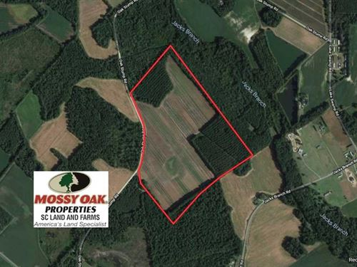 Reduced, 72.36 Acres of Farm And : Timmonsville : Darlington County : South Carolina