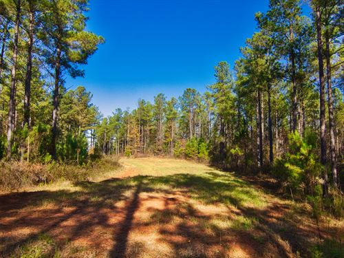 116 Acres Near Lake Succession : Abbeville : South Carolina