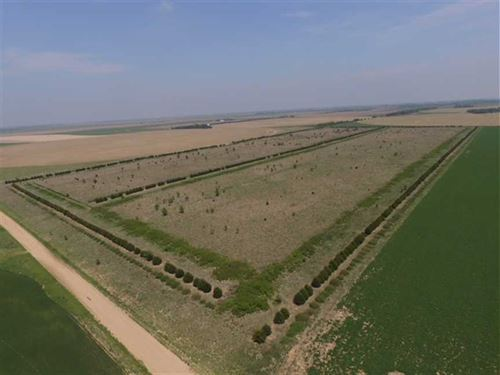 80 Acres of Good Hunting And CR : Saint John : Stafford County : Kansas