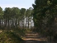 201.89 Acres in Corapeake, NC : Corapeake : Gates County : North Carolina