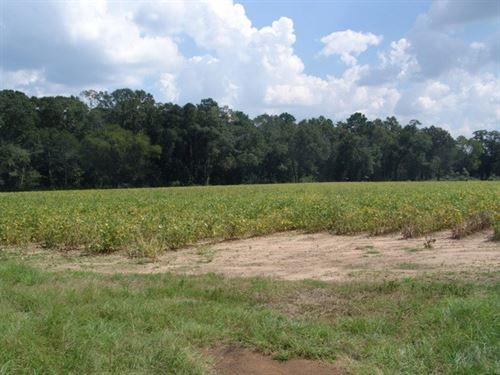 Beautiful Open Land : Columbia : Houston County : Alabama
