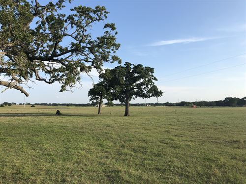 20 Acres In Franklin Isd : Franklin : Robertson County : Texas