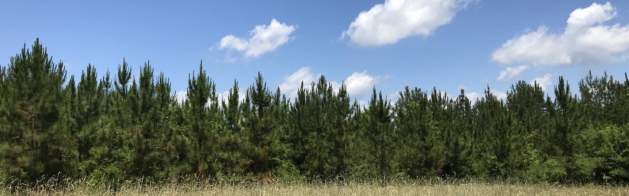 Carr Tract In Castleberry : Castleberry : Conecuh County : Alabama
