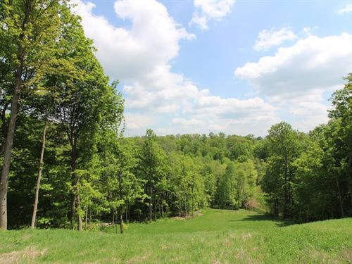 Tiber Rd - 26 Acres : Jacobsburg : Belmont County : Ohio