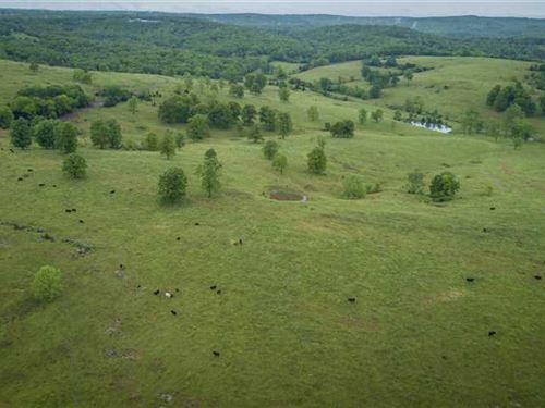 Rotational Grazing Cattle Farm in : Wasola : Ozark County : Missouri
