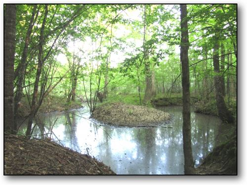 58 Acres In Choctaw County On Heste : Ackerman : Choctaw County : Mississippi