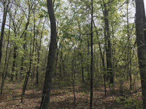 Hunting, Timber, And Creek : Buena Vista : Marion County : Georgia