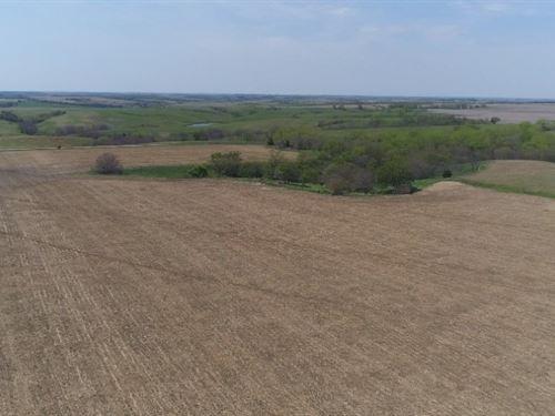 Nance County Drycrop : Fullerton : Nance County : Nebraska