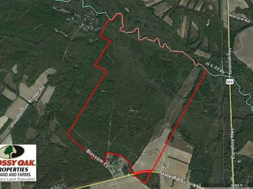 Reduced, 605 Acres of Waterfront : Denmark : Bamberg County : South Carolina