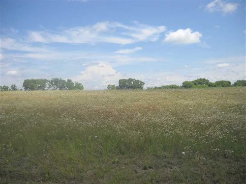 14.15 Acres of Open Pasture Land : Burkville : Lowndes County : Alabama