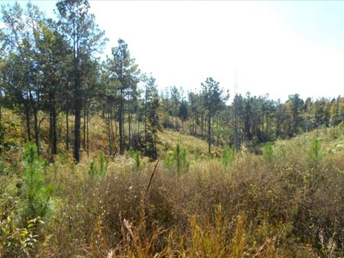 170 Acres In Carroll County In McCa : McCarley : Carroll County : Mississippi