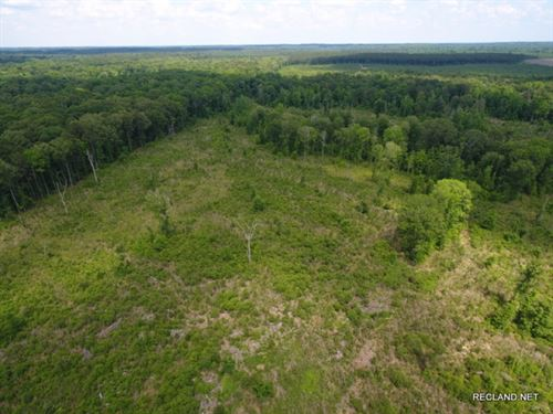 159 Ac, Timberland & Hunting : Columbia : Caldwell Parish : Louisiana