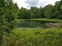 124.6+/- Ac Usable Land With Lake : Tracy City : Grundy County : Tennessee