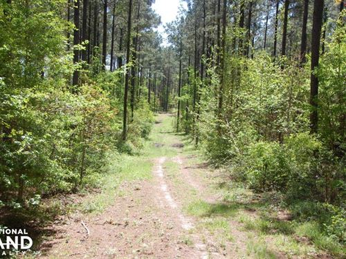 Timberfield, Timberland And Hunting : Gloster : Amite County : Mississippi