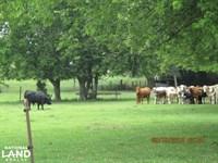Jakin Pasture/Farmland : Jakin : Early County : Georgia