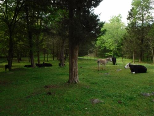 110 Ac Farm W/Barn Apartment, Pond : Gainesboro : Jackson County : Tennessee