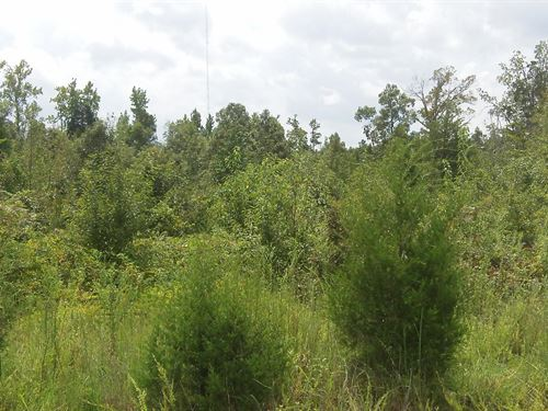 Sawmill Farms, 10.32 Acre Lot : Gray Court : Laurens County : South Carolina