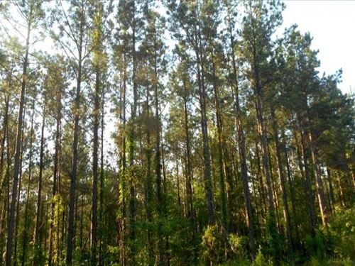 190 Acres In Yalobusha County In Oa : Tillatoba : Yalobusha County : Mississippi