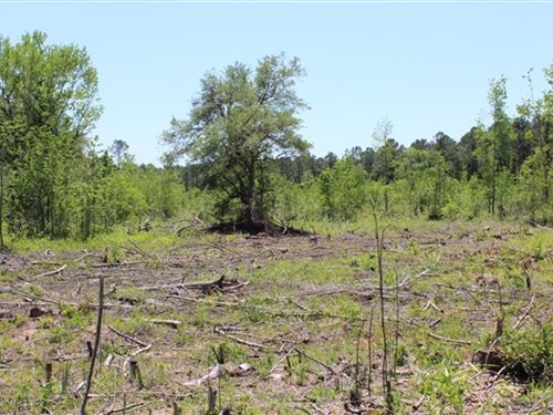 20.3 Acres - Williamsburg Co, Sc : Salters : Williamsburg County : South Carolina
