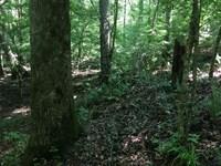 28 Acre Hunting / Timber Property : Lumpkin : Stewart County : Georgia