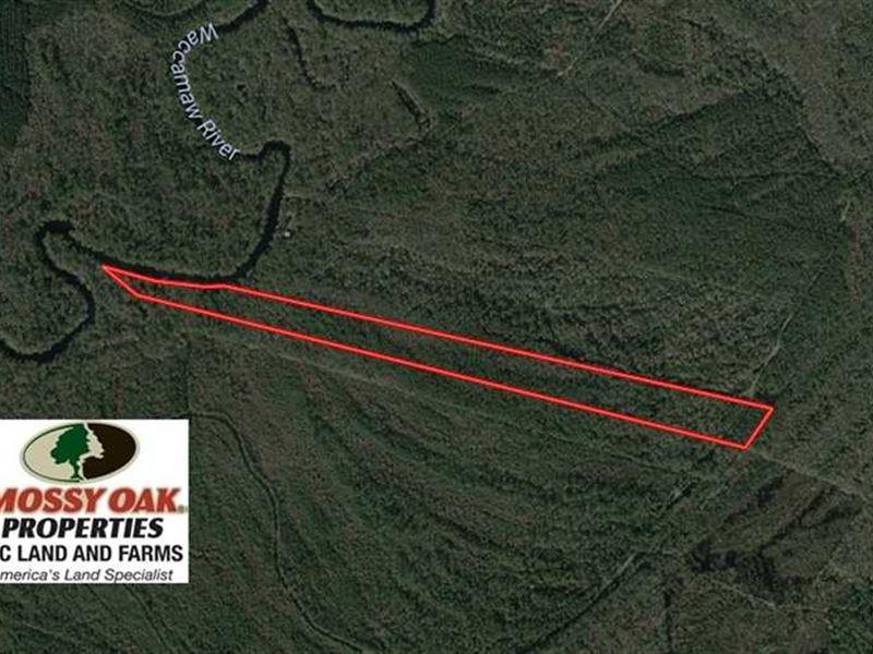 28.14 Acres of Hunting And Timber : Ash : Brunswick County : North Carolina