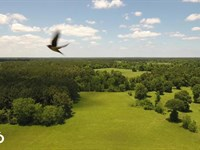 35 Acre Homesite/Recreational Tract : Kennard : Trinity County : Texas