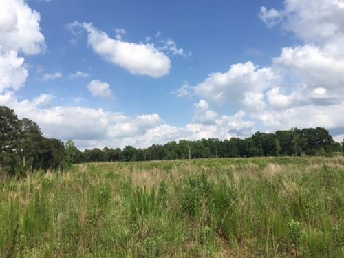 120 Acres- Creek-3 Ponds : Carson : Jefferson Davis County : Mississippi