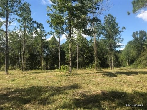 142 Ac, Timberland & Hunting : Sikes : Winn Parish : Louisiana