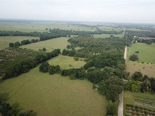 Arcadia 54 Acres : Arcadia : De Soto County : Florida