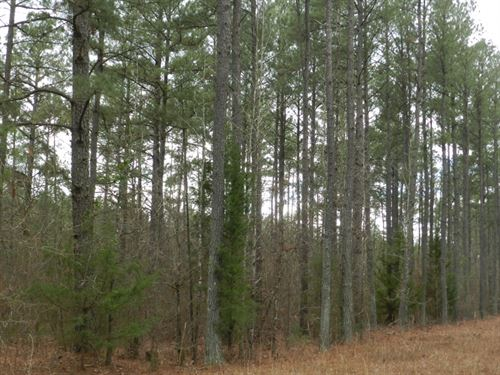22 Ac Country Homesite : Monticello : Jasper County : Georgia