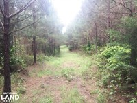 Ranch Road Hunting And Timber Inves : Hamilton : Marion County : Alabama