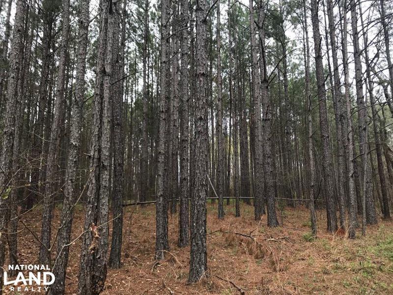 Weogufka Creek Recreational And Hun : Weogufka : Coosa County : Alabama