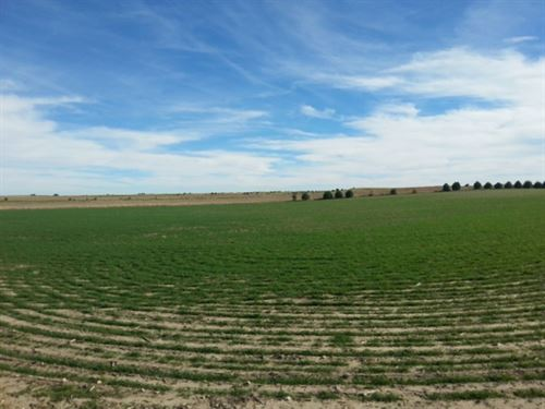 J Triple D Properties Dry Farmland : Potter : Kimball County : Nebraska