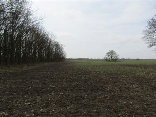 120 Acres In Tunica County In Dunde : Dundee : Tunica County : Mississippi