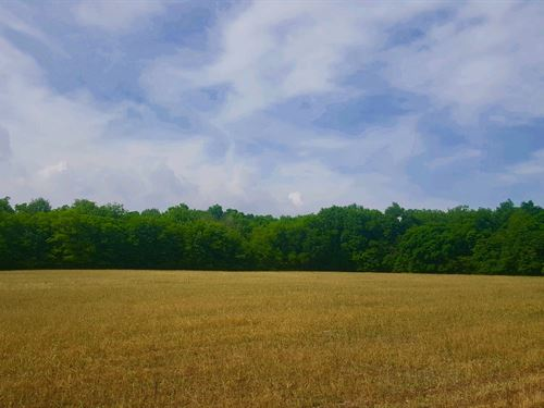 Fite Rd - 81 Acres : Bethel : Brown County : Ohio