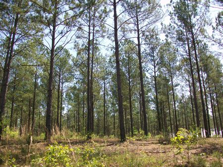 146 Acres Great Hunting Tract : Vienna : Dooly County : Georgia