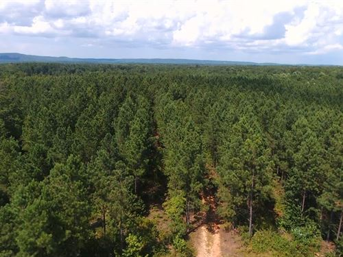 Plantation Pine Tract : Shiloh : Harris County : Georgia