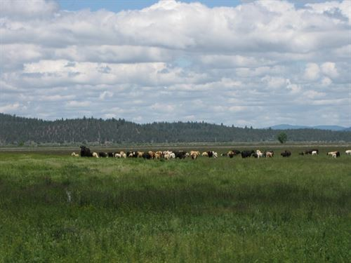 338+ Acre Langell Valley Ranch : Bonanza : Klamath County : Oregon