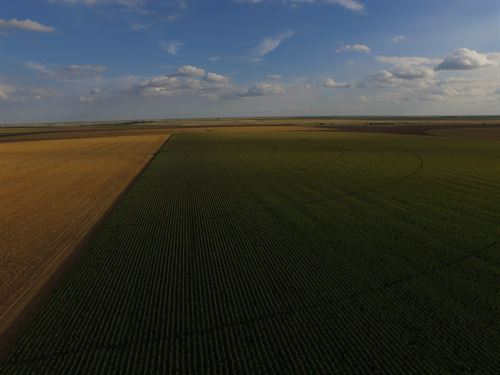 Certified Organic Irrigated Farm : Marienthal : Wichita County : Kansas
